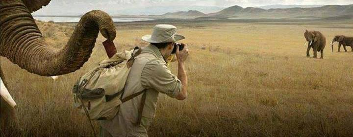 explorer taking a photo of animals in wildlife